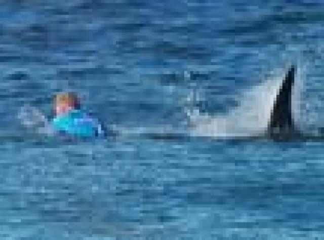 Ünlü sörfçü köpek balığından yumrukla kurtuldu
