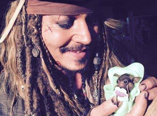 Jack Sparrow Yavru Yarasa Beslerken...
