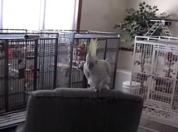 Bir Queen Şarkısı ve Bir Papağan!
