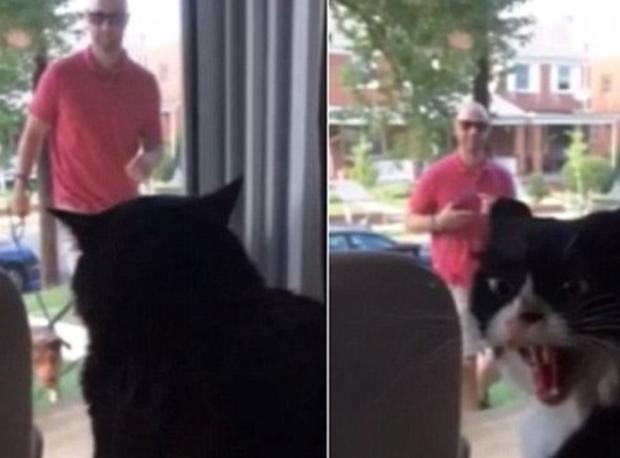 Kıskanç Kedi Fenomen Oldu