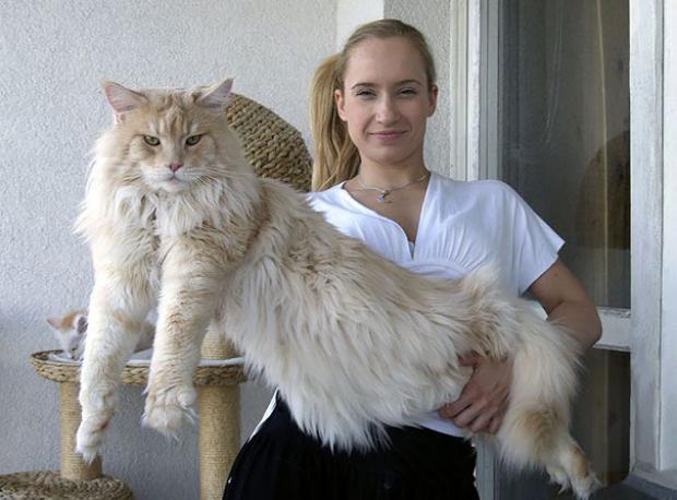 Bunlar Kediyse Sizinkiler Kedi-cik!