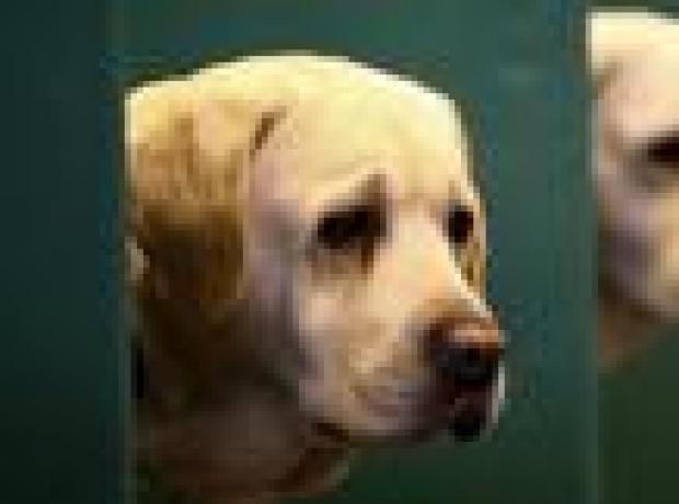 DERGİ - Bakışma yoluyla köpekle bağ kurmak