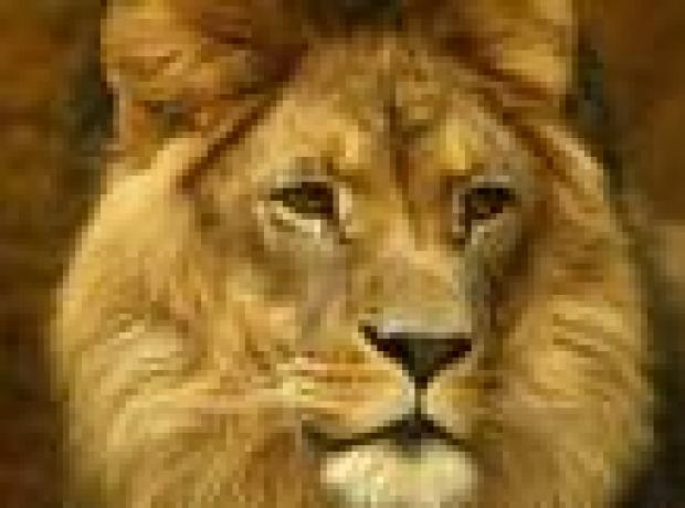Zimbabve'de yeni bir Cecil vakası